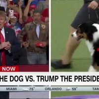 CNN compares Trump to dog at Westminster show: 'President who barks out insults'