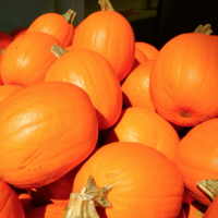 NJ reminds residents to pay pumpkin tax
