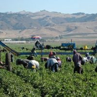 House of Representatives Passes Amnesty for 1 Million+ Illegal Immigrant Farmworkers