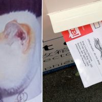 ELECTORAL FRAUD: Deceased Cat Receives Voter Registration Through the Mail in Atlanta